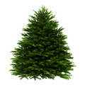 Momi fir tree isolated on white Royalty Free Stock Photos
