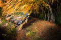 Momiji tunnel japanese maple red yellow leaves in autumn Royalty Free Stock Photo
