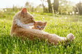 Momma cat love lays beside her baby kitten Royalty Free Stock Photos