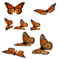 Monarch butterflies collection of isolated on white Royalty Free Stock Photos