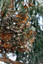 Motýle zhromaždiť v zver a rastlinstvo oblasť