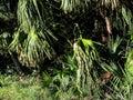 monarch butterfly swamp