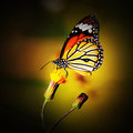 Monarch butterfly on flower in garden Royalty Free Stock Photo