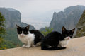 Monastery cats the only inhabitants of the monasteries except monks are the greece Royalty Free Stock Photo