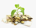 Money conception,plant growing on coin pile Royalty Free Stock Photo