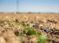 Money on crop land