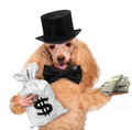 Money dog holding Royalty Free Stock Photo