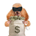 Money dog holding. Royalty Free Stock Image