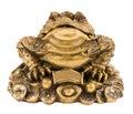 Money frog Stock Photos