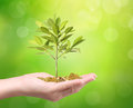 Money growing from plant coins Royalty Free Stock Photo