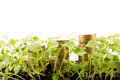 Money growing in soil , Business success concept. Royalty Free Stock Photo