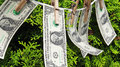 Money hanging on a tree background Royalty Free Stock Images