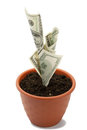 Money plant Royalty Free Stock Photo