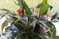 Money Plant Royalty Free Stock Photo
