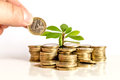 Money and plant with hand Royalty Free Stock Photo