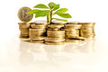 Money and plant Royalty Free Stock Photo
