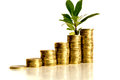 Money and plant  on white Royalty Free Stock Photo