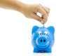 Money saving with blue piggy bank Stock Image
