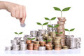 Money saving concept with coin stack and tree growing concept white background Stock Photo