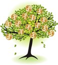 Money  tree. Stock Photos