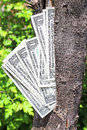 Money tree Royalty Free Stock Photos