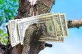 Money tree amreican dollars with Stock Photos