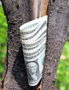 Money tree amreican dollars with Royalty Free Stock Image