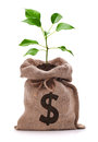 Money tree bag with dollar sign and growing out the top isolated on white Stock Photo