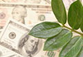 Money tree and dollars Royalty Free Stock Photo