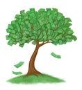 Money tree on grass