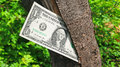 Money tree one dollar on Stock Images