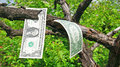 Money tree one dollars on Royalty Free Stock Photo