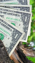 Money tree with one dollars Royalty Free Stock Photo