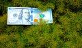 Money Tree at right angles Royalty Free Stock Photo