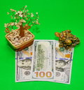 Money tree  and three-legged frog and dollars Royalty Free Stock Photo