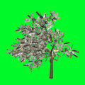 Money tree US dollar Stock Images