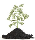 Money Tree with US Dollar banknotes as leaves Royalty Free Stock Photo