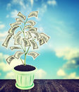 Money tree with US dollar banknotes Royalty Free Stock Photo
