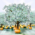 Money trees Stock Image