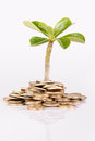 Money under trees or plant Royalty Free Stock Images
