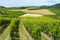 Monferrato italy country landscape of asti piedmont at summer with vineyards Royalty Free Stock Photos