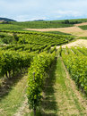 Monferrato italy country landscape of asti piedmont at summer with vineyards Stock Photo