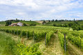Monferrato italy country landscape of asti piedmont at summer with vineyards Stock Image