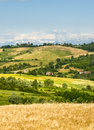 Monferrato italy road with cypresses and vineyards in asti piedmont at summer Royalty Free Stock Images