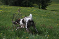 Mongrel dog beautiful playing in the meadow Stock Image