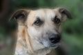 Mongrel dog portrait very cute close up Stock Image