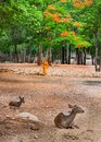 Monk doing daily cleaning routine at at the tiger temple in kanchanaburi thailand may or wat Royalty Free Stock Photo