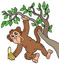 Monkey with banana on tree Stock Photo