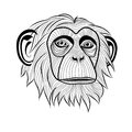 Monkey chimpanzee head ape animal simia troglodytes symbol for mascot or emblem design logo vector illustration for t shirt sketch Stock Photography