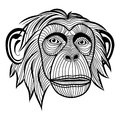 Monkey chimpanzee head ape animal simian symbol for mascot or emblem design logo vector illustration for t shirt sketch tattoo Royalty Free Stock Photos